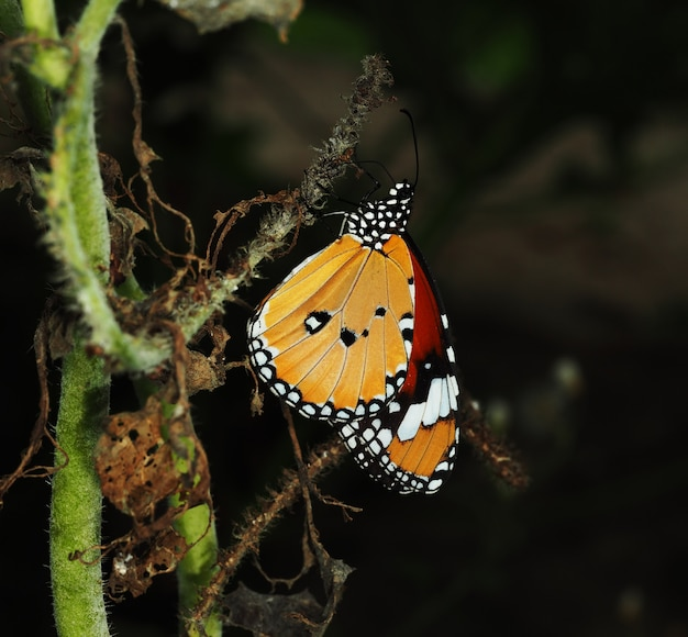 Un papillon orange repose sur du lierre sec
