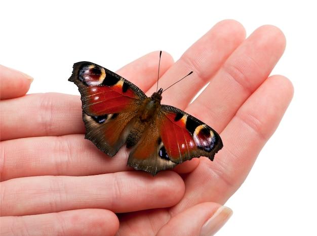 Papillon paon européen, inachis io, sur une main en face de fond blanc