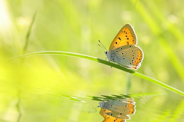 Papillon parmi l'herbe verte fraîche au soleil