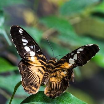 Papillon peint sur feuille