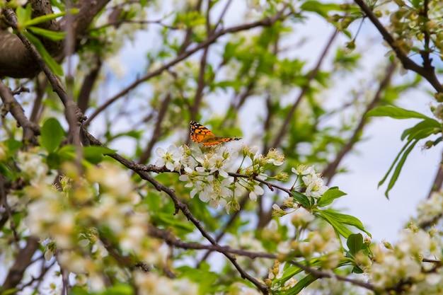 Papillon perché sur les branches de la prune en fleurs
