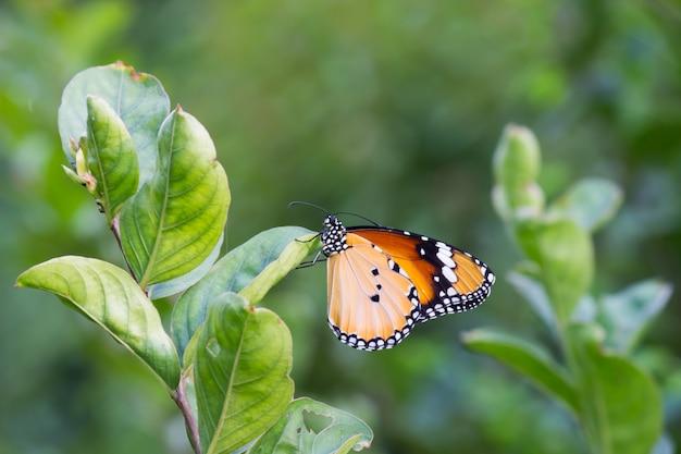 Papillon sur la plante