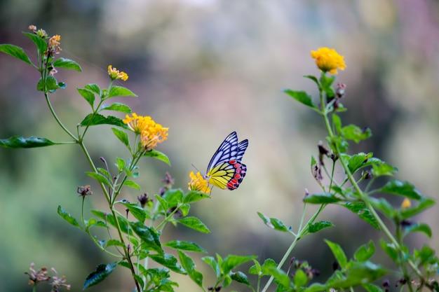 Papillon sur les plantes à fleurs