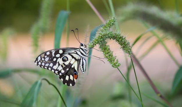 Papillon sur les plantes