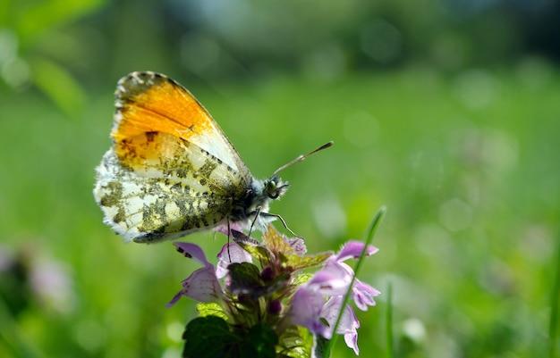 Papillon sur une prairie ensoleillée