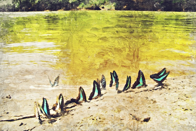 Papillon près de la rivière. art numérique impasto peinture à l'huile par photographe