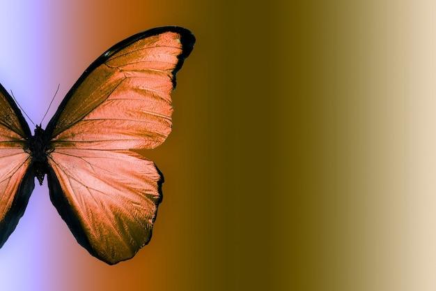 Papillon rouge sur fond dégradé bleu-jaune