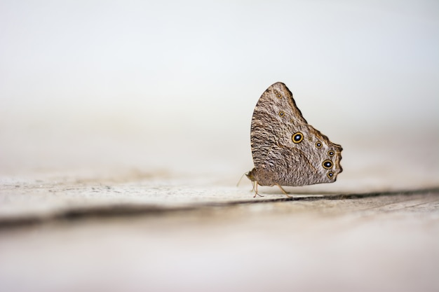Papillon sauvage sur sol en béton