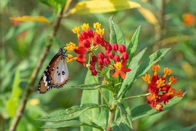 Papillon tigre ordinaire reposant sur la plante