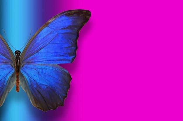 Papillon tropical sur fond dégradé