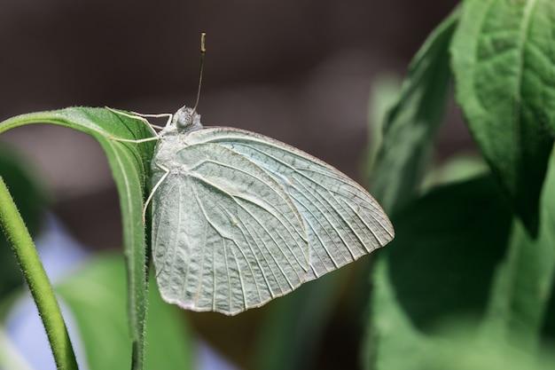 Papillon vert avec des fleurs