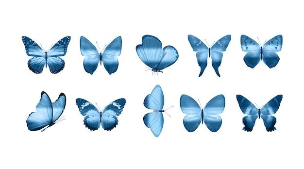 Papillons bleus isolés sur fond blanc. papillons tropicaux. insectes pour la conception. peintures à l'aquarelle