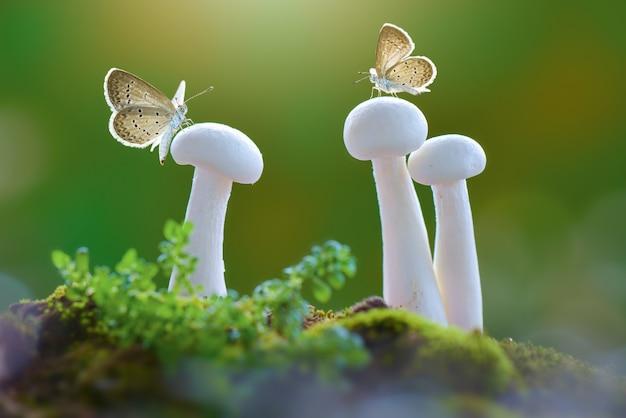 Papillons sur champignon