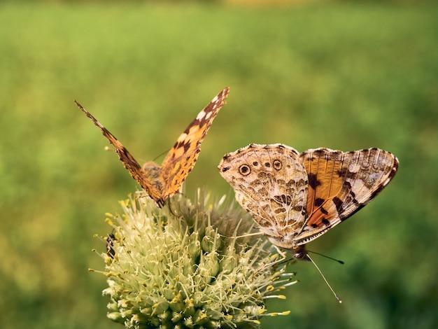 Papillons colorés sur une fleur.