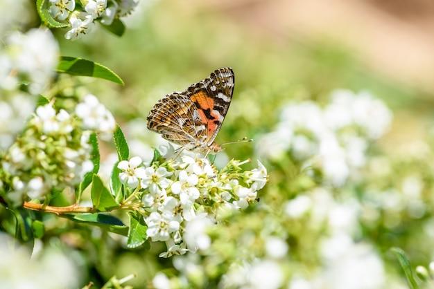 Papillons et fleurs