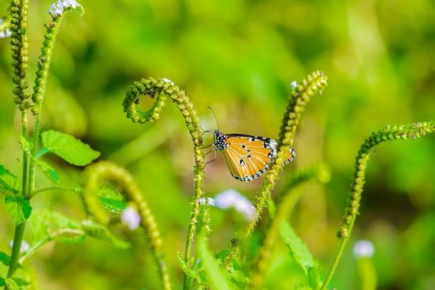Les papillons mangent
