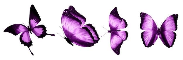 Papillons roses isolés sur fond blanc. papillons tropicaux. insectes pour la conception. peintures à l'aquarelle