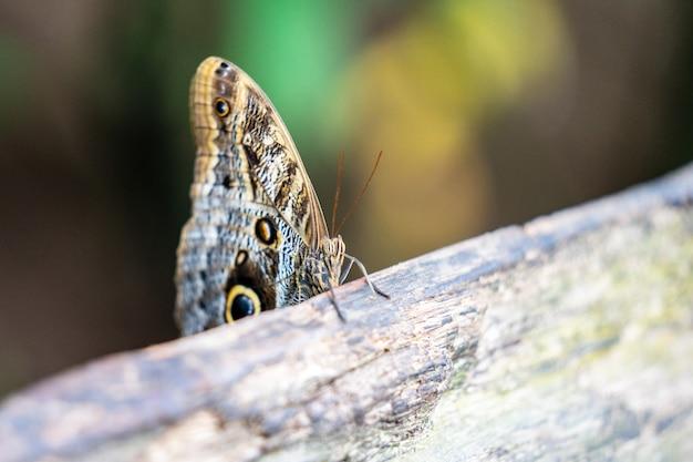 Papillons tropicaux colorés