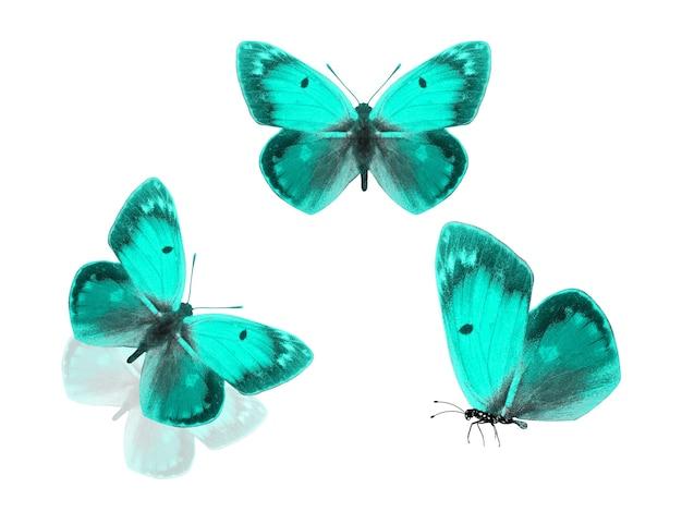 Papillons verts isolés sur fond blanc. photo de haute qualité