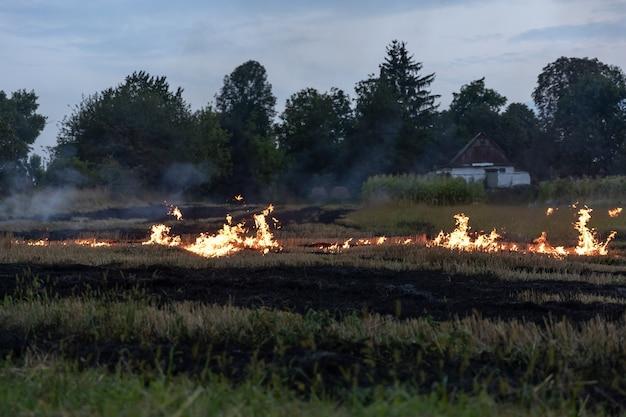 Par une chaude journée d'été, l'herbe sèche brûle sur le terrain. champ en feu avec de l'herbe sèche.