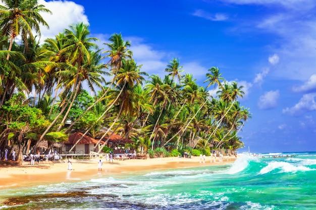Paradis des palmiers topiques au sri lanka