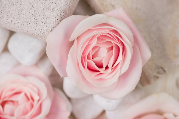 Paramètres de spa avec des roses. divers articles utilisés dans les traitements de spa sur fond de bois blanc.