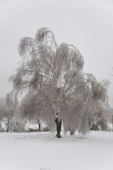Parc avec des arbres dans la glace. forêt d'hiver
