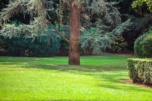 Parc avec arbres feuillus et larges pelouses