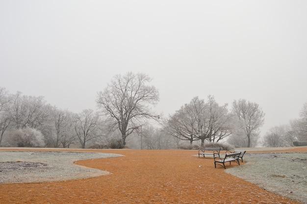 Parc avec arbres nus et sol orange un jour brumeux