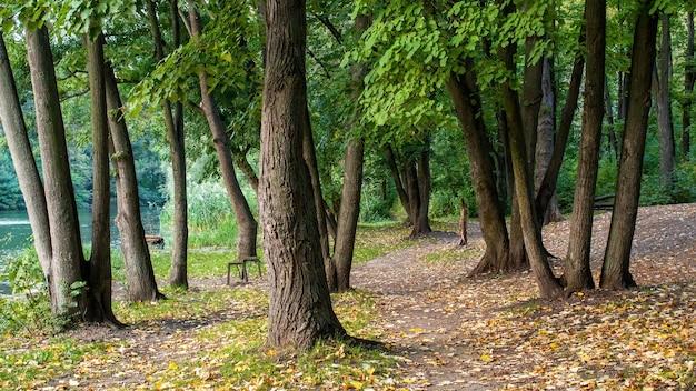 Parc avec arbres verts vieux banc à proximité, feuilles mortes, chemins étroits entre les arbres, lac à gauche