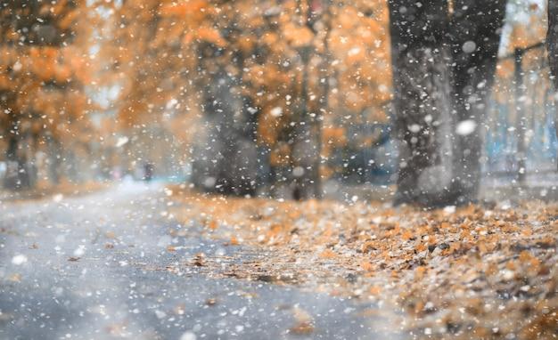 Parc d'automne au temps des premières neiges