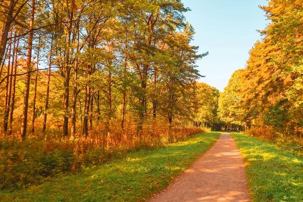 Parc d'automne avec chênes jaunes et érables autour du sentier de randonnée.