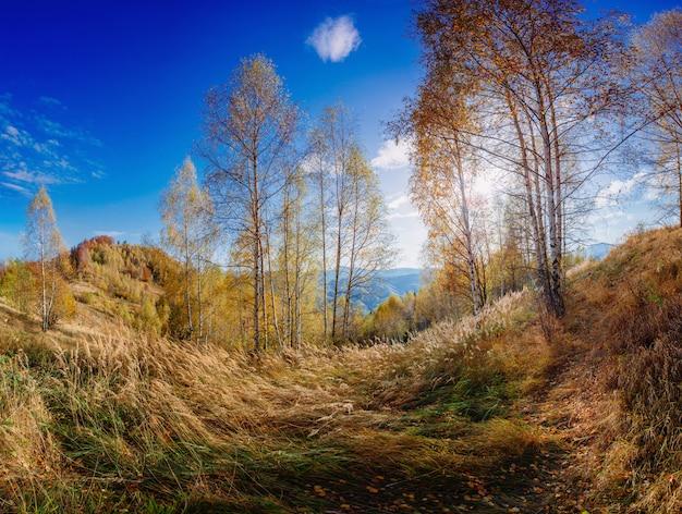 Parc automne paysage