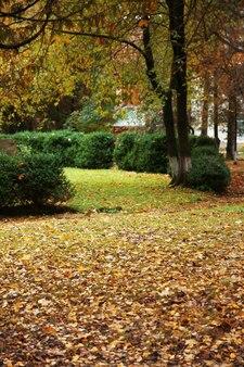 Parc d'automne