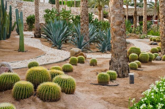 Parc bien aménagé avec des palmiers et des cactus.