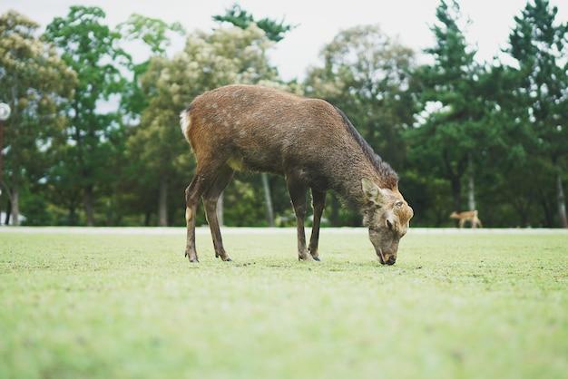 Parc de cerfs et pelouse
