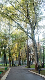 Parc à chisinau avec de hauts arbres verts et sol humide, bancs, moldavie