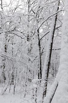 Un parc avec différents arbres en hiver