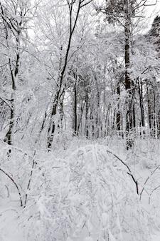 Le parc est couvert de neige en hiver