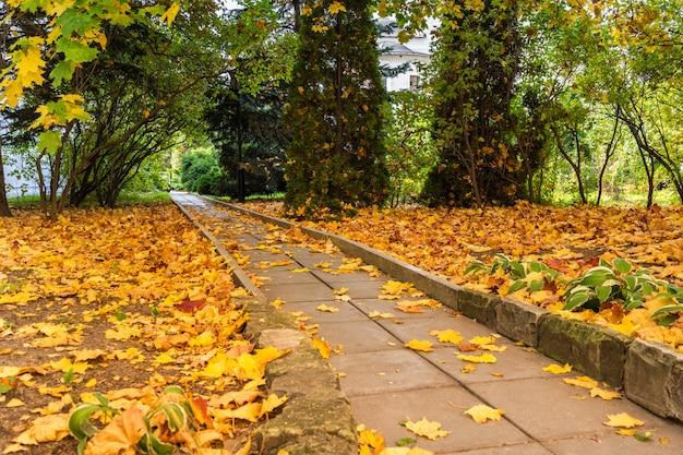 Parc avec des feuilles tombées en automne
