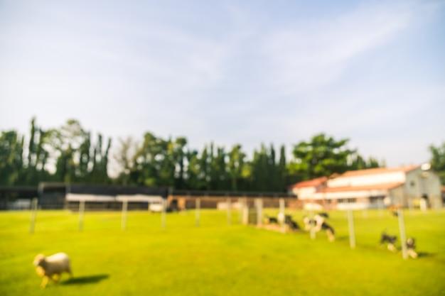 Parc flou abstrait avec champ vert