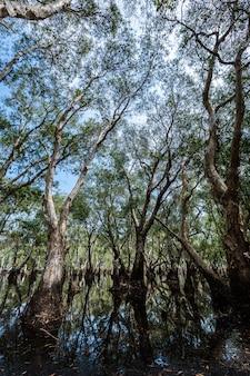 Parc forestier de mangrove et réflexions fluviales en thaïlande