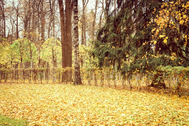 Parc ou forêt de la ville d'automne, arbres d'automne et feuillage orange jaune tombé au sol