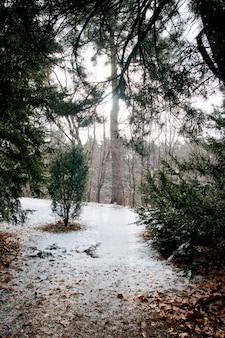 Parc avec de grands arbres au début de la première chute de neige en hiver
