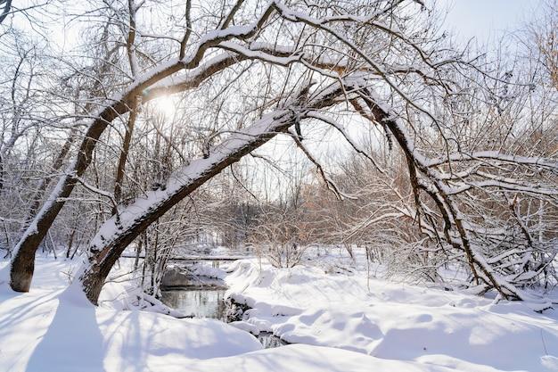 Parc d'hiver l'après-midi. le ruisseau n'est pas gelé, les arbres et le sol sont recouverts de neige.