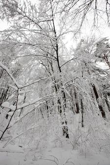 Parc D'hiver Avec Arbres Sans Feuillage Photo Premium