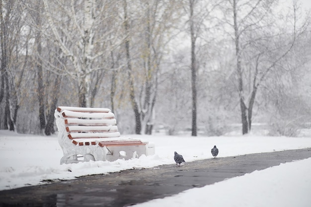 Parc d'hiver enneigé et bancs. parc et embarcadère pour nourrir canards et pigeons. la première neige a recouvert le parc d'automne.