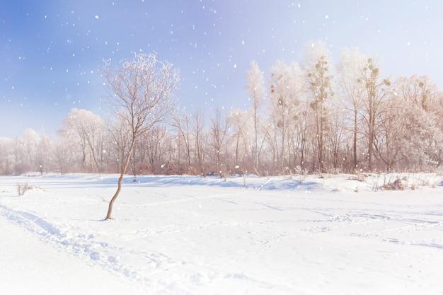 Parc d'hiver. flocons de neige. matin