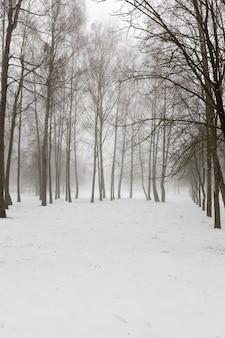 Parc d'hiver