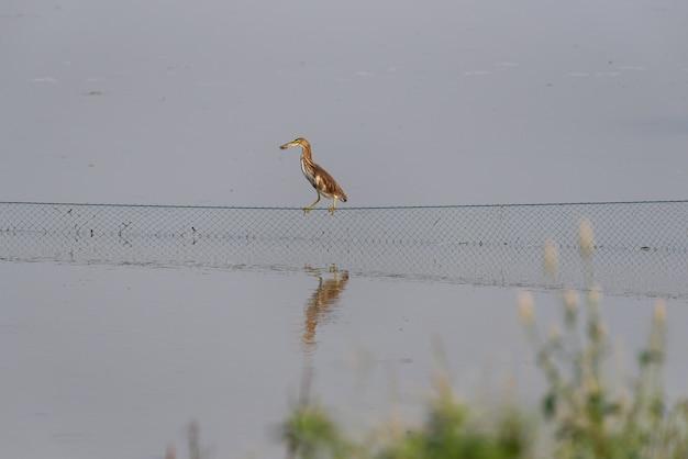 Le parc des marécages est écologiquement bon. des oiseaux comme les aigrettes s'en nourrissent.